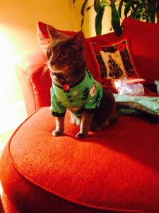 This is my cat in Christmas pajamas. Because you DESERVE to smile.